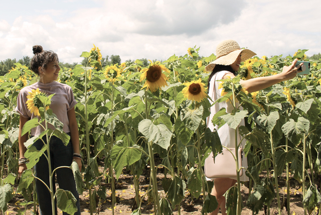 Advice From A Sunflower | SELFTIMERS