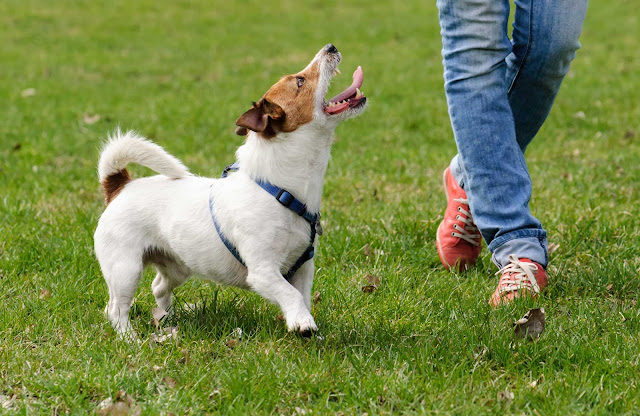 13 Common Dog Training Mistakes and How to Avoid Them