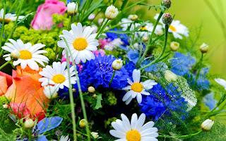 Цветы доброты