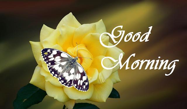 good morning yellow rose image