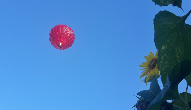 Project 366 2016 day 242 - Hot air balloon // 76sunflowers