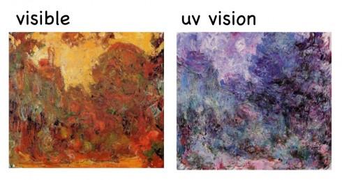 Robins depot: Ultraviolet syn gav Monet et nyt indtryk af verden