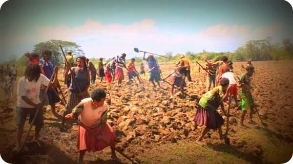 Pengelolaan Lahan Pertanian di Jayawijaya Belum Maksimal