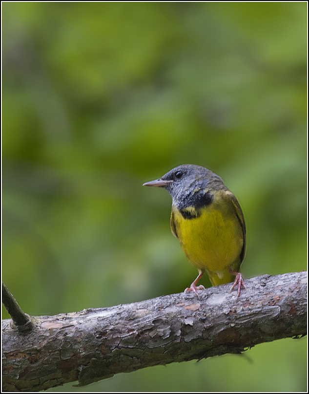 Ontario Birds and Herps: This and that