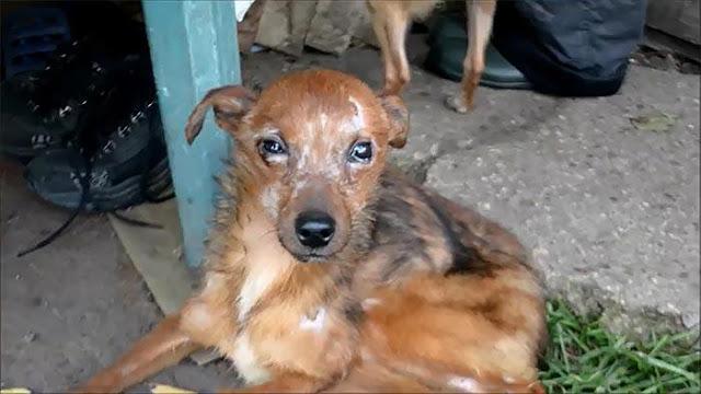 Волонтеры спасли 11 собак, которые жили в ужасных условиях