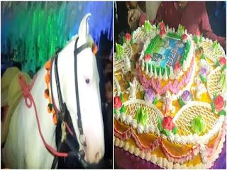 घोड़ी के जन्मदिन पर काटा गया 50 पाउंड का केक, जमकर हुई आतिशबाजी, मालिक ने कही ये बात
