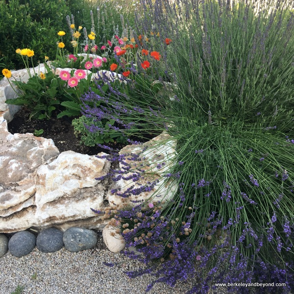 blooming garden at Allegretto Vineyard Resort in Paso Robles, California