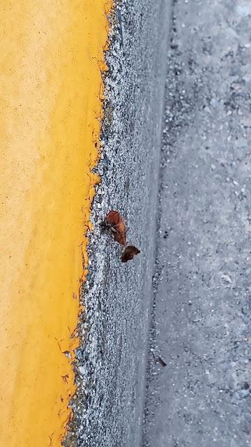 アリがなんか運んでる