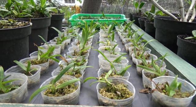 Agro Wisata Kahayangan Suguhkan Keindahan Anggrek