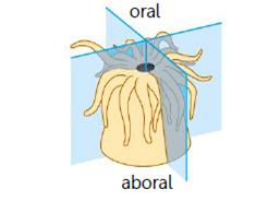 Materi animalia Gambar 3