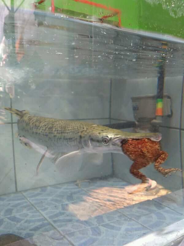Jenis Ikan Di Perairan Indonesia Pdf