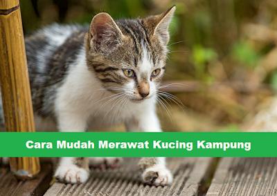 vitamin untuk kucing kampung