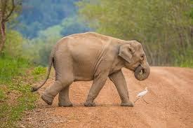 Ajian Gajah Wulung Ilmu Putih Tanpa Puasa