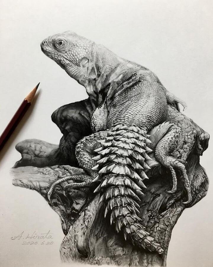 03-Ctenasaura-defensor-lizard-A-Hirata-www-designstack-co