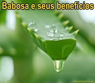 babosa-e-beneficios-medicinais