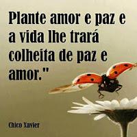 Plante Amor e Paz