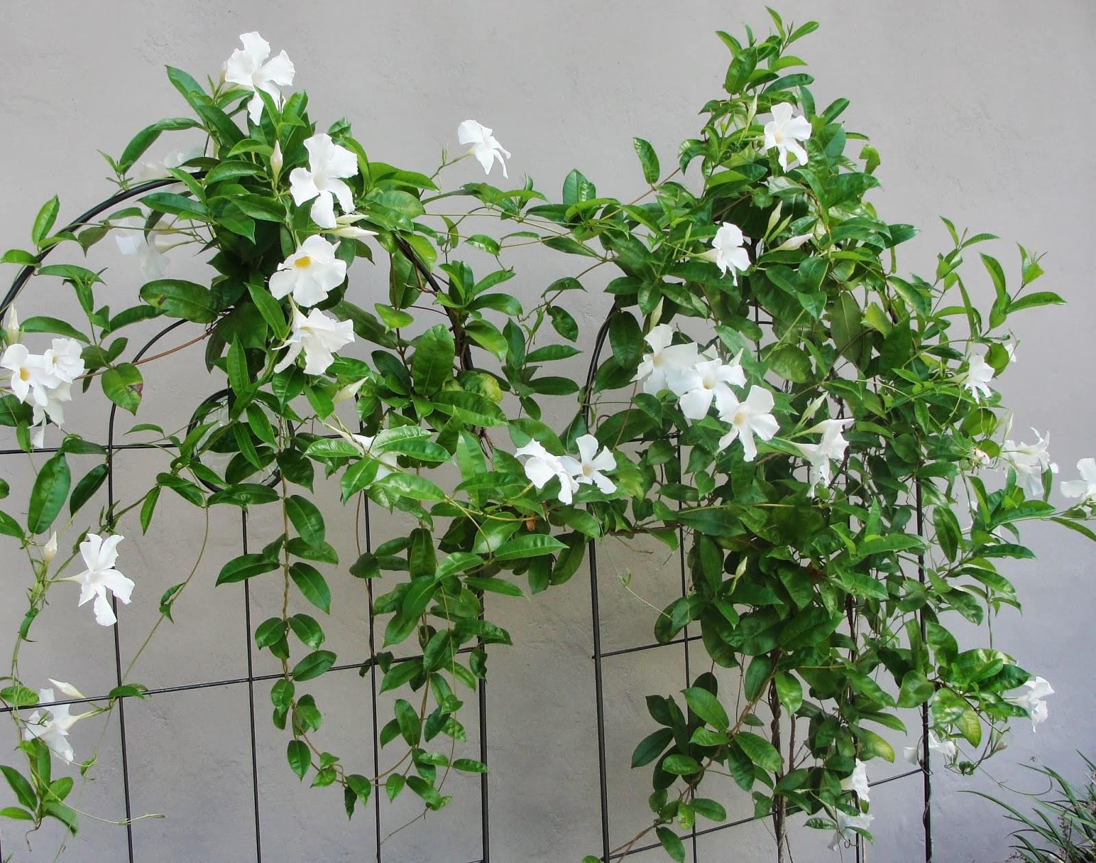 Florida Flowering Vines Garden Garden Inspiration