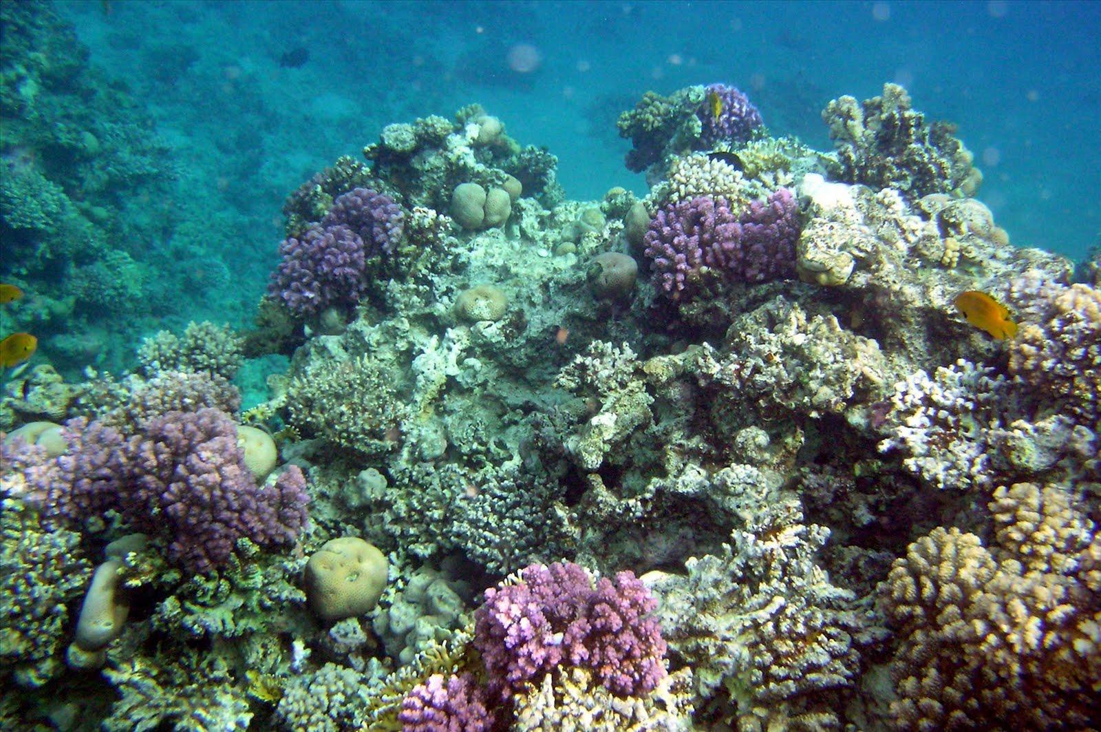 Darcy Cruz: coral reef wallpaper