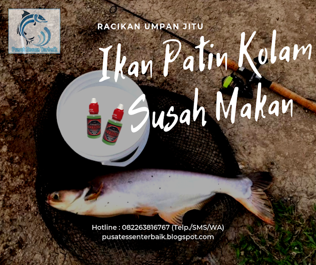 Umpan Ikan Patin Kolam Yang Susah Makan Paling Mantap Pusat Essen Terbaik