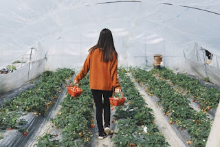 Woman with orange shirt and black pants walking between the rows of a white plastic covered hoop house. Photo by Raychan on Unsplash