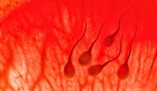 Obat Sperma Bercampur Darah
