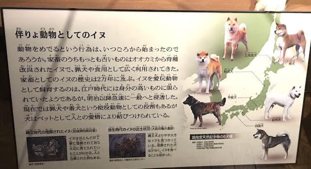 忠犬ハチ公は今は国立科学博物館に剥製になっている。【o】