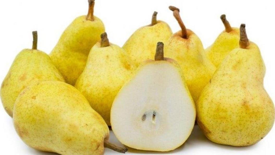 bibit buah pir Makassar