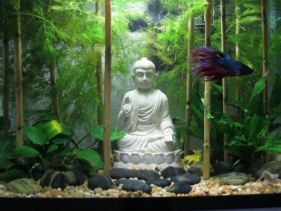 Spiffy pet products betta fish tank setup ideas that make for Deco mural zen