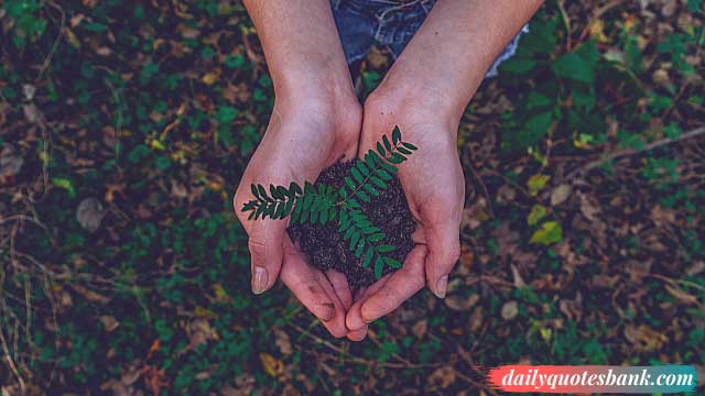 100 Inspirational Quotes About Planting Trees For Future Generations