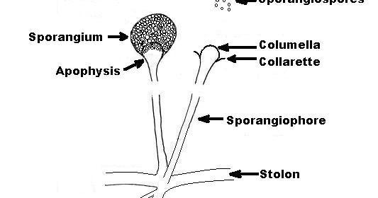Hogyan mozognak a férgek, Talajban élő férgek Jamur helminthosporium oryzae