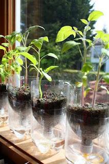 hidroponik sayuran sistem wick