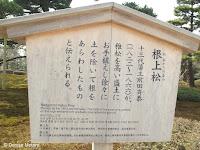 The Neagarinomatsu pine history - Kenroku-en Garden, Kanazawa, Japan