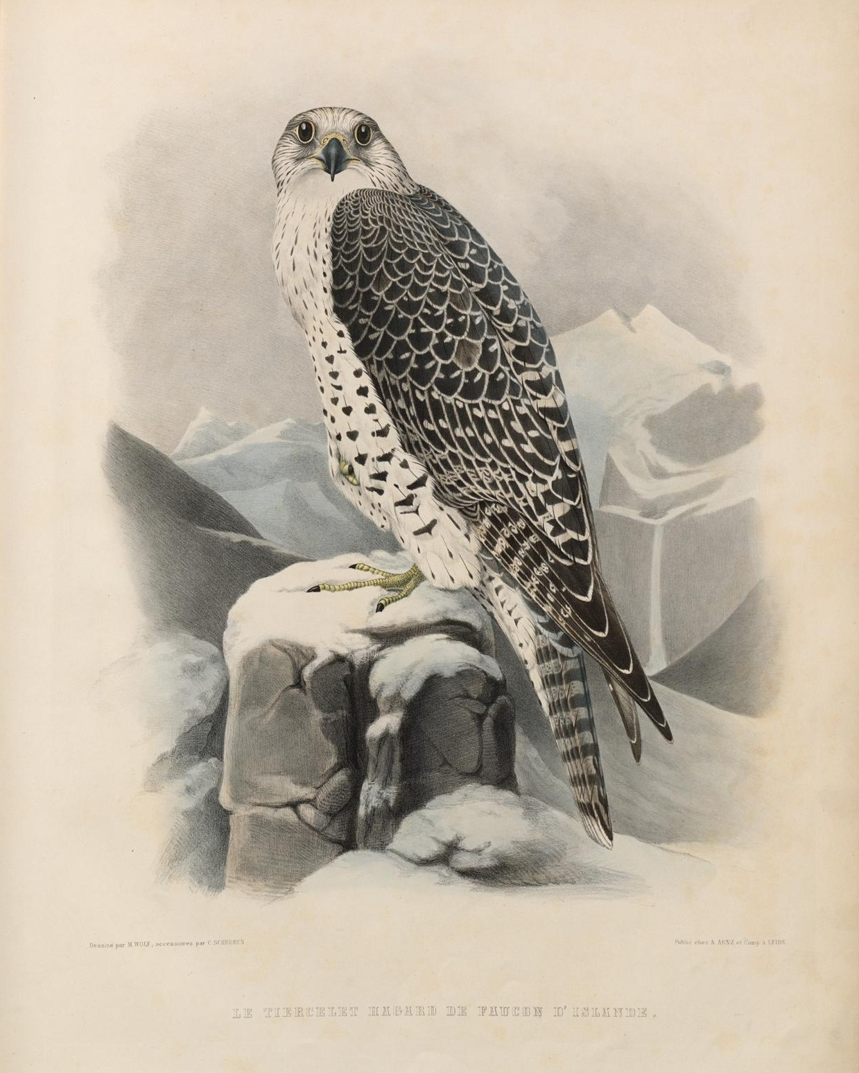 raptor lithograph
