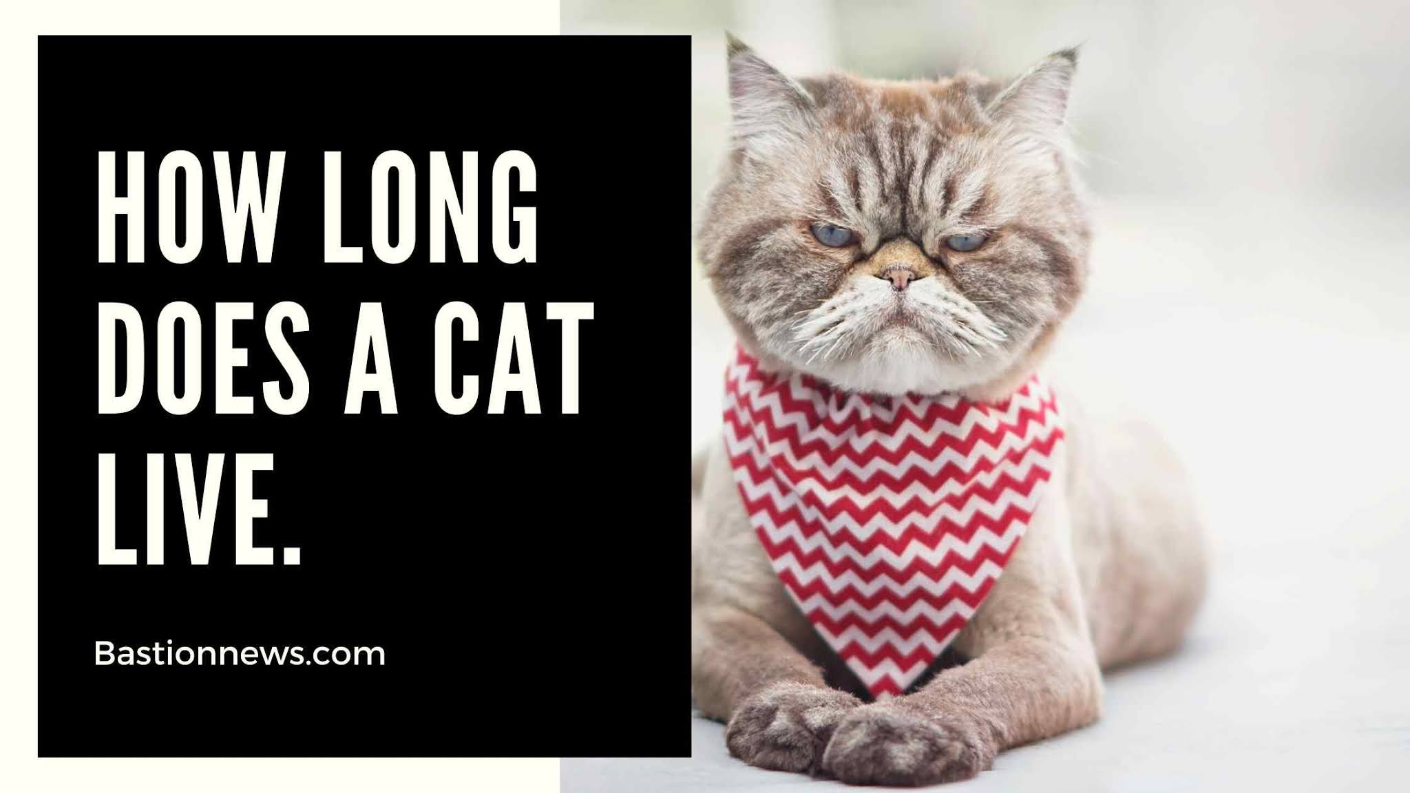 How Long Does A Cat Live