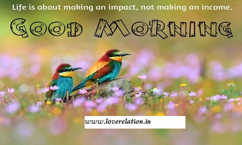 Best 50 Good Morning New Hd Images Free Morning Photos