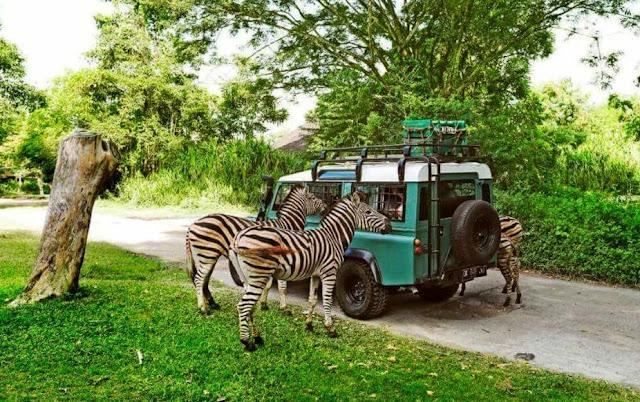 2. Bali Safari and Marine Park