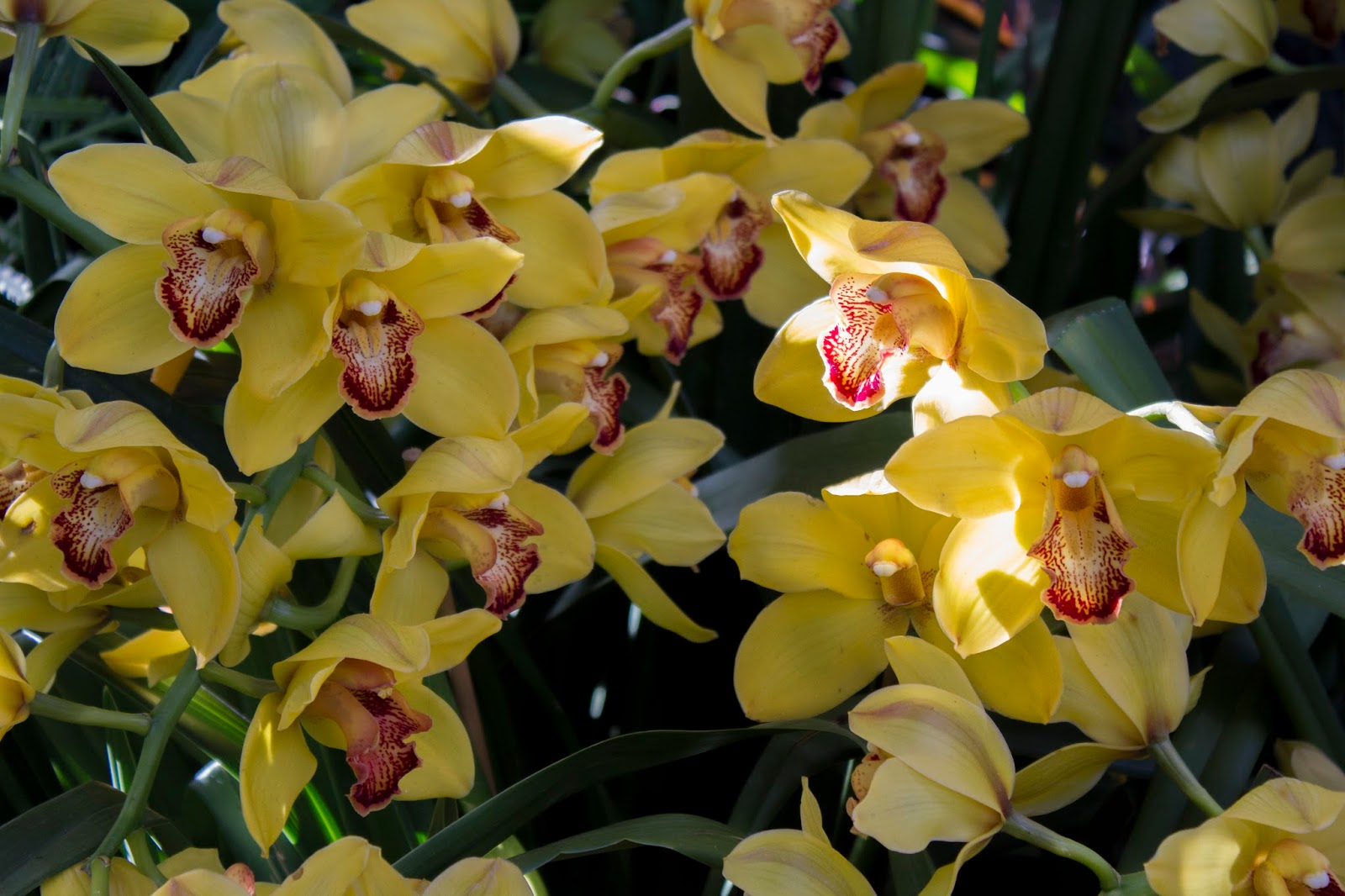 Marias Orchids 03012017 04012017