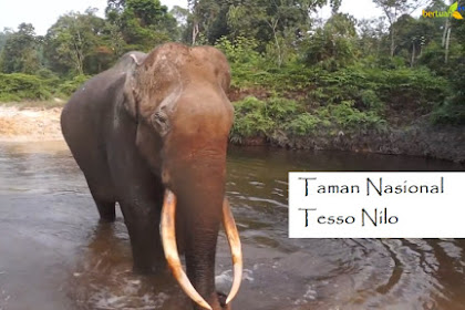 Taman Nasional Tesso Nilo TNTN Riau