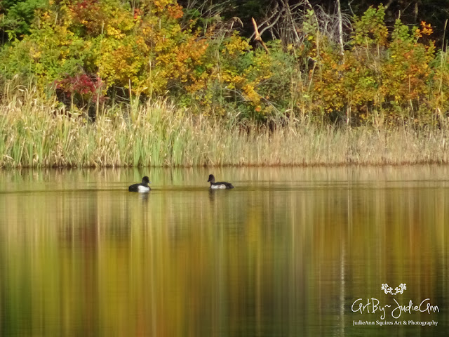 Tufted Ducks Photography Prints