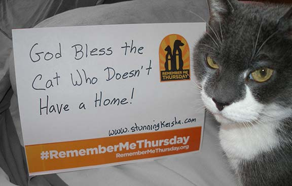 Remember Me Thursday: God Bless the Cat Who Doesn't Have a Home