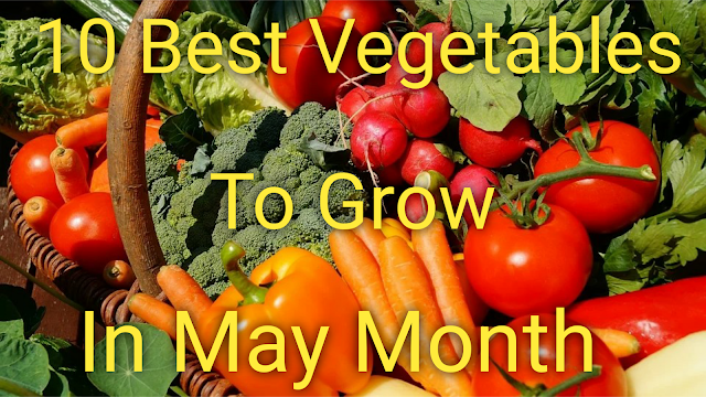 vegetables,how to grow vegetables,vegetable gardening,summer vegetables,may vegetables,vegetable garden,vegetables to grow in may,vegetables to sow in may,may vegetables grow,what vegetables to grow in may,vegetables grows in may,best vegetables to plant in may,sow vegetables seeds in may,organic vegetables,vegetables grown in mayjune july,vegetables grow in may,easiest vegetables to grow,summer season vegetables name in india,growing vegetables,summer vegetables to grow