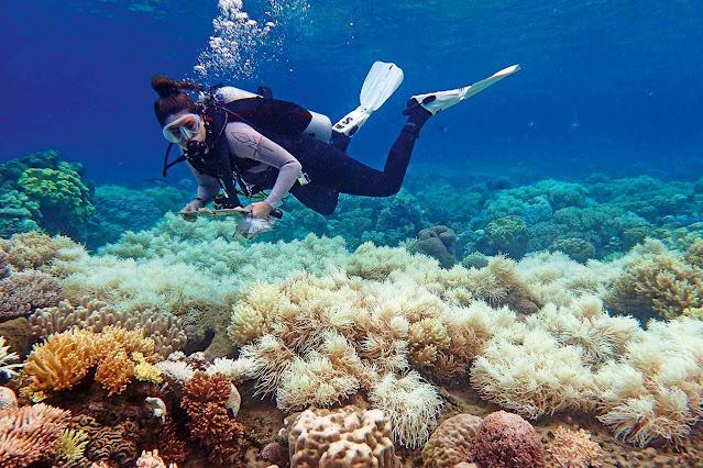 Na Grande Barreira de Corais que estaria 'morta' ou 'morrendo'
