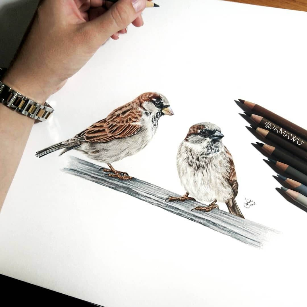 02-Birds-J-Wuiz-Animals-and-Food-Art-Pencil-Drawings-www-designstack-co