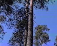 Комарово Щучье озеро 2002