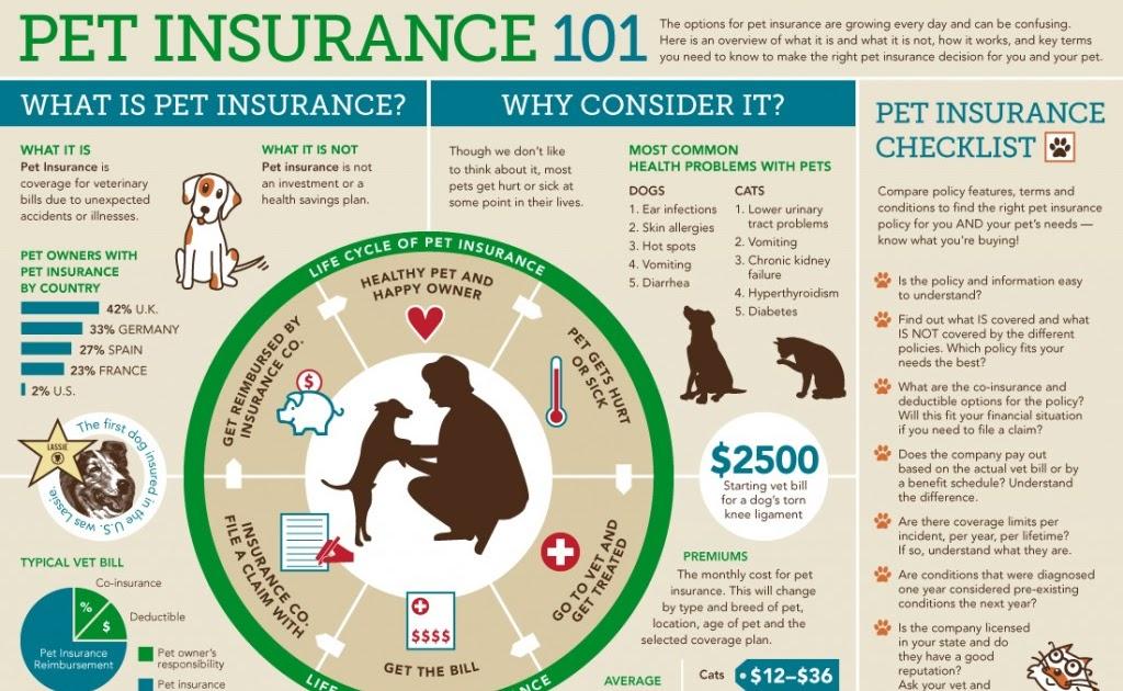 Oink Com Travel Insurance