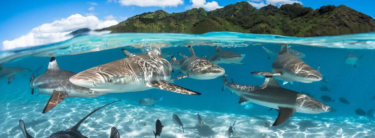 Fotos espectaculares de los Océanos