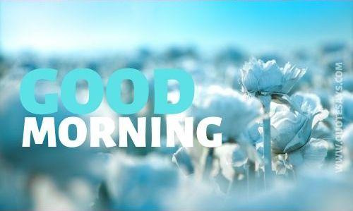 Good morning bkue flower