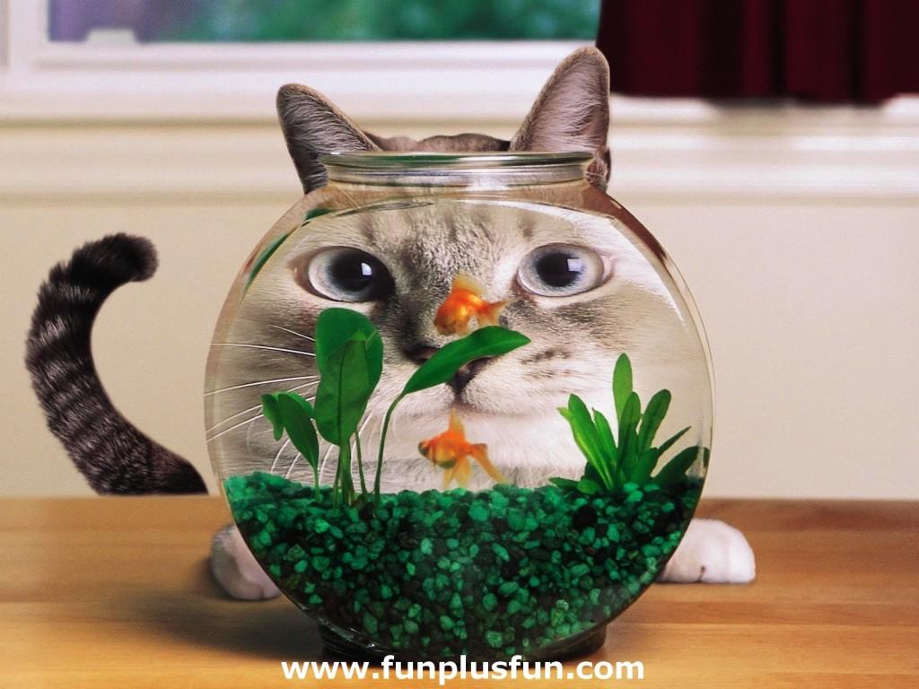 https://1.bp.blogspot.com/-ALLzwH6spoo/Tu7QjqmKlvI/AAAAAAAAE8o/f_JLkca7fww/s1600/Cute-Funny-Animals_1-1024x768.jpg