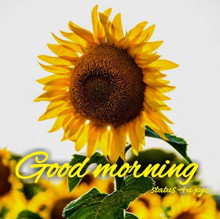 21+ good morning images with flowers free download