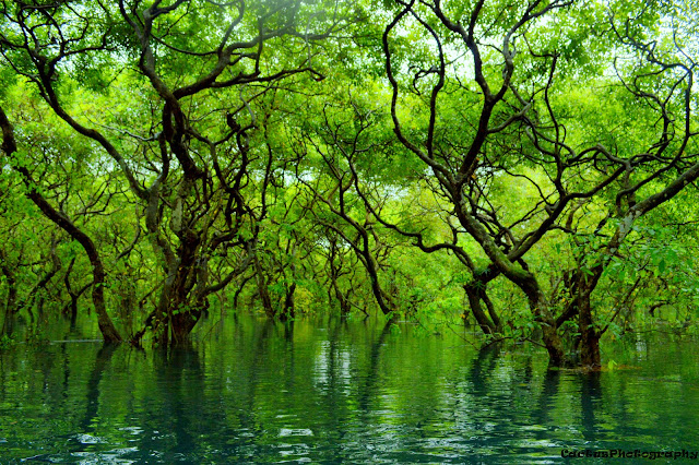 Ratargul Swamp Forest, Sylhet, Bangladesh, Trip Navigation Bangladesh